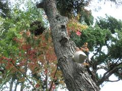 tree_jiten_240.jpg