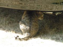 cat_240